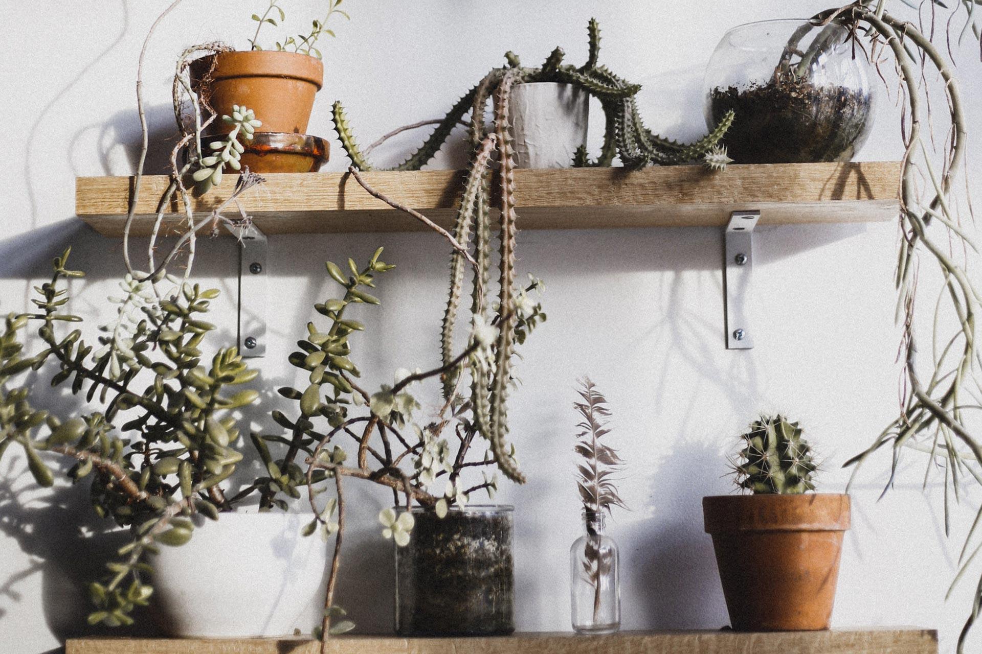 interieurinrichting-botanisch-wonen2
