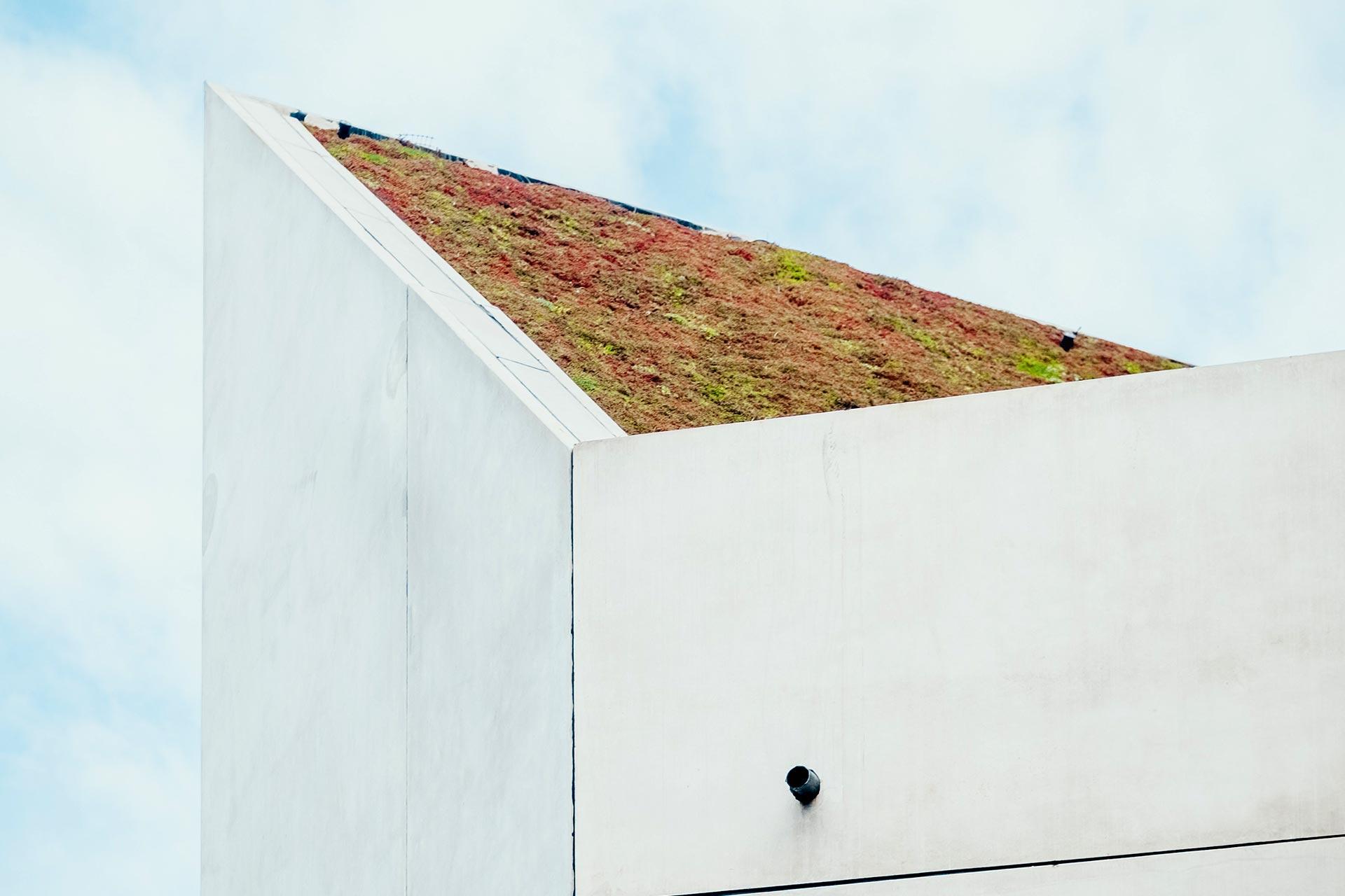 groendak renovatie door aannemer 2