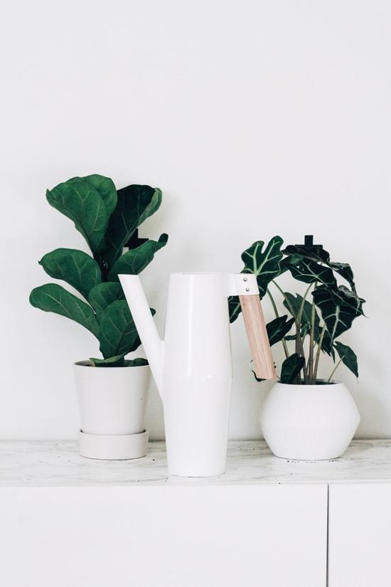 10 tips om van je huis een echte thuis te maken - Plaats planten en bloemen in je huis - Interieurkabinet
